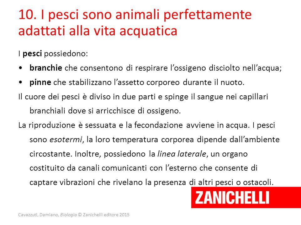 Cavazzuti, Damiano, Biologia © Zanichelli editore 2015 10. I pesci sono animali perfettamente adattati alla vita acquatica I pesci possiedono: branchi