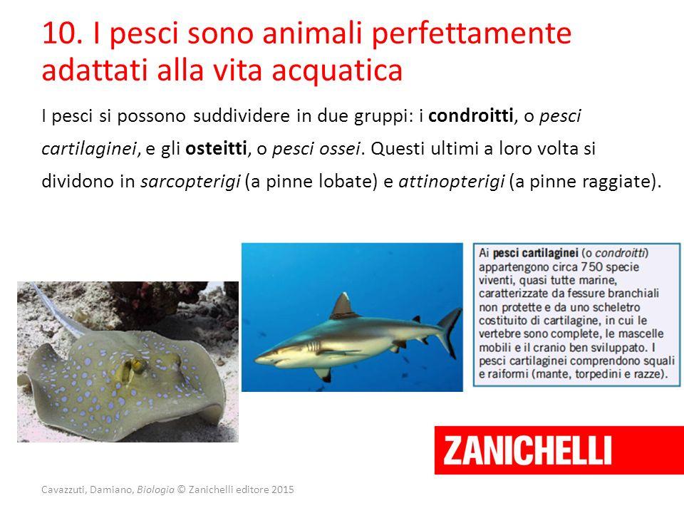 Cavazzuti, Damiano, Biologia © Zanichelli editore 2015 10. I pesci sono animali perfettamente adattati alla vita acquatica I pesci si possono suddivid