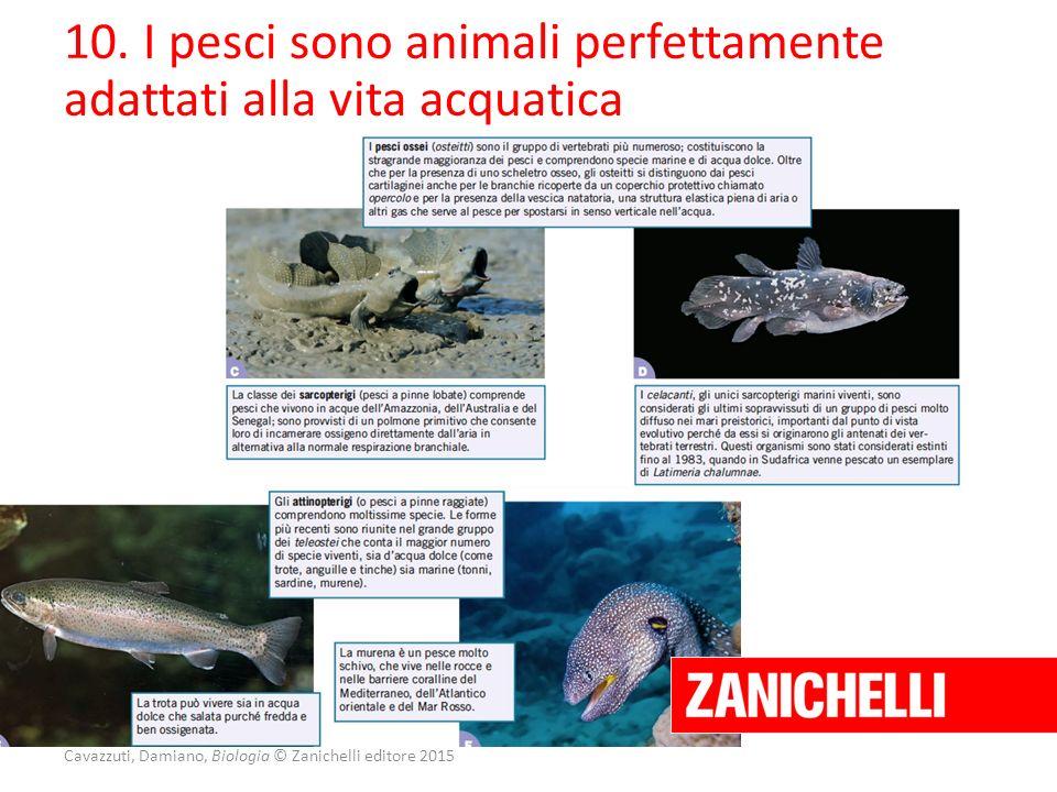 Cavazzuti, Damiano, Biologia © Zanichelli editore 2015 10. I pesci sono animali perfettamente adattati alla vita acquatica