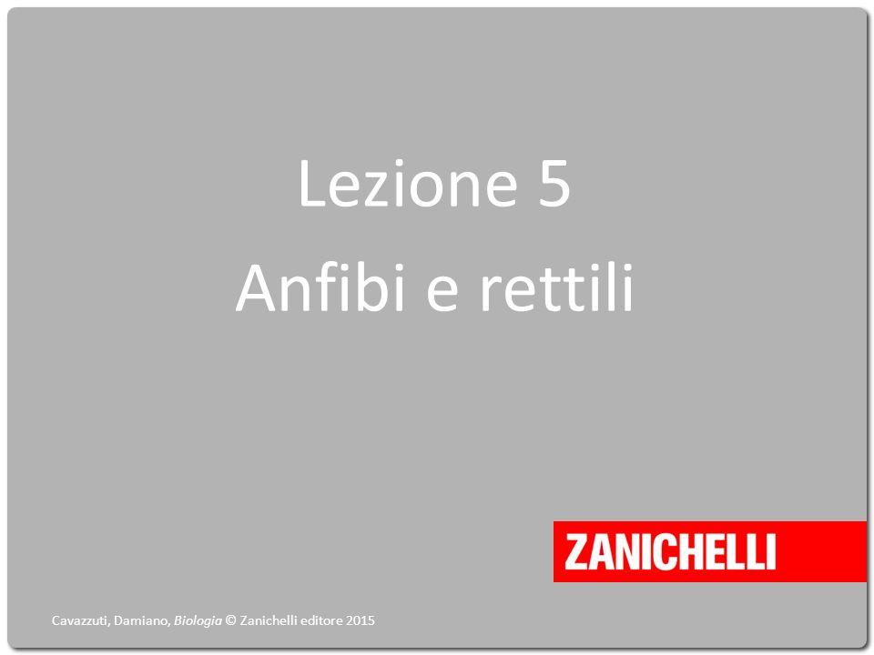 Lezione 5 Anfibi e rettili Cavazzuti, Damiano, Biologia © Zanichelli editore 2015