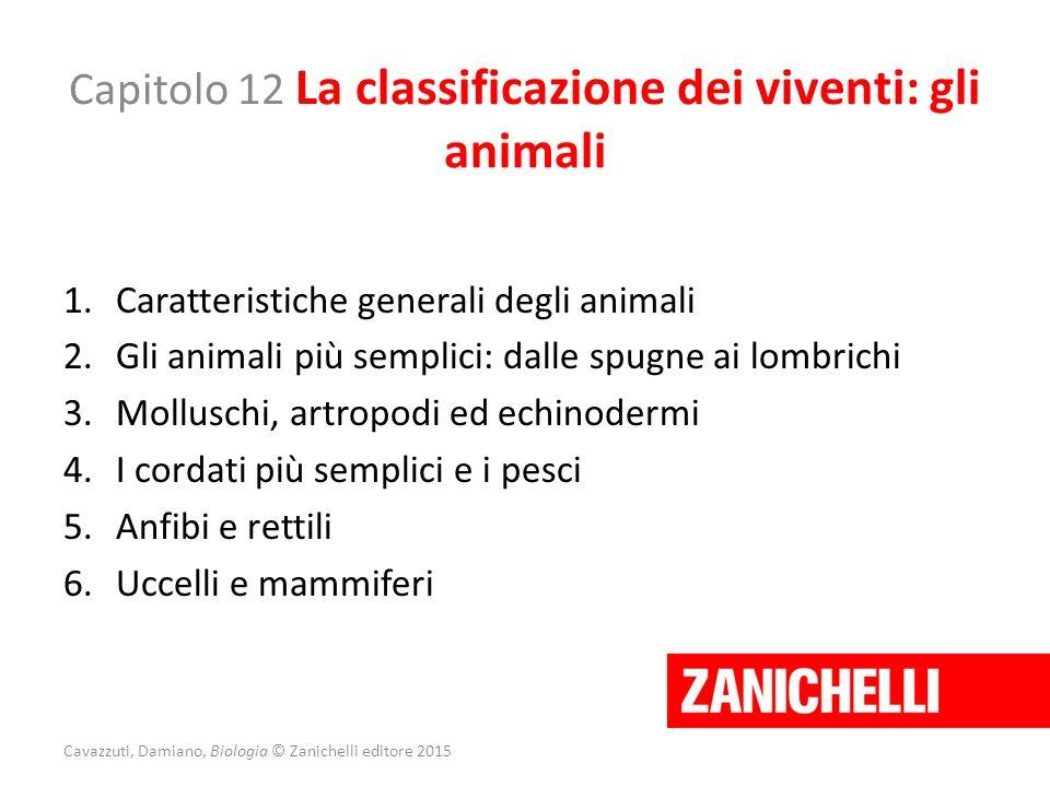 Capitolo 12 La classificazione dei viventi: gli animali 1.Caratteristiche generali degli animali 2.Gli animali più semplici: dalle spugne ai lombrichi