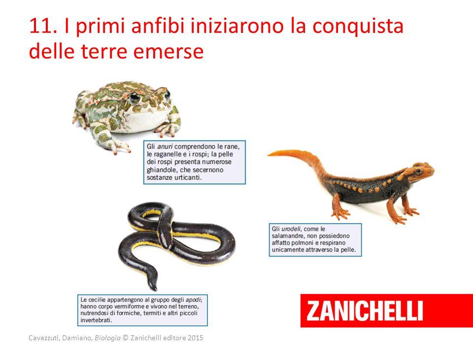 Cavazzuti, Damiano, Biologia © Zanichelli editore 2015 11. I primi anfibi iniziarono la conquista delle terre emerse
