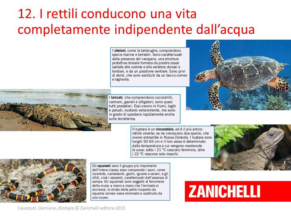 Cavazzuti, Damiano, Biologia © Zanichelli editore 2015 12. I rettili conducono una vita completamente indipendente dall'acqua