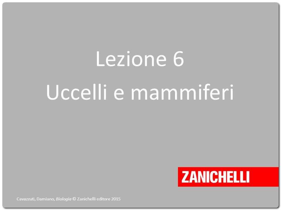Lezione 6 Uccelli e mammiferi Cavazzuti, Damiano, Biologia © Zanichelli editore 2015