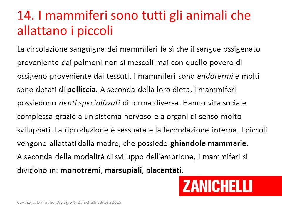 Cavazzuti, Damiano, Biologia © Zanichelli editore 2015 14. I mammiferi sono tutti gli animali che allattano i piccoli La circolazione sanguigna dei ma