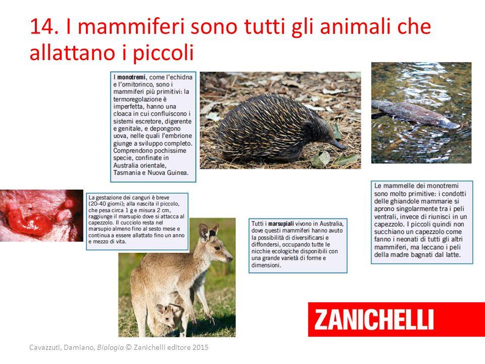 Cavazzuti, Damiano, Biologia © Zanichelli editore 2015 14. I mammiferi sono tutti gli animali che allattano i piccoli