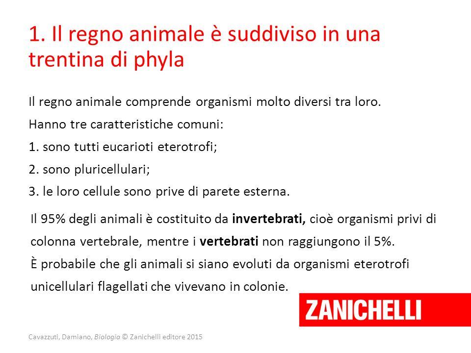 1. Il regno animale è suddiviso in una trentina di phyla Il regno animale comprende organismi molto diversi tra loro. Hanno tre caratteristiche comuni