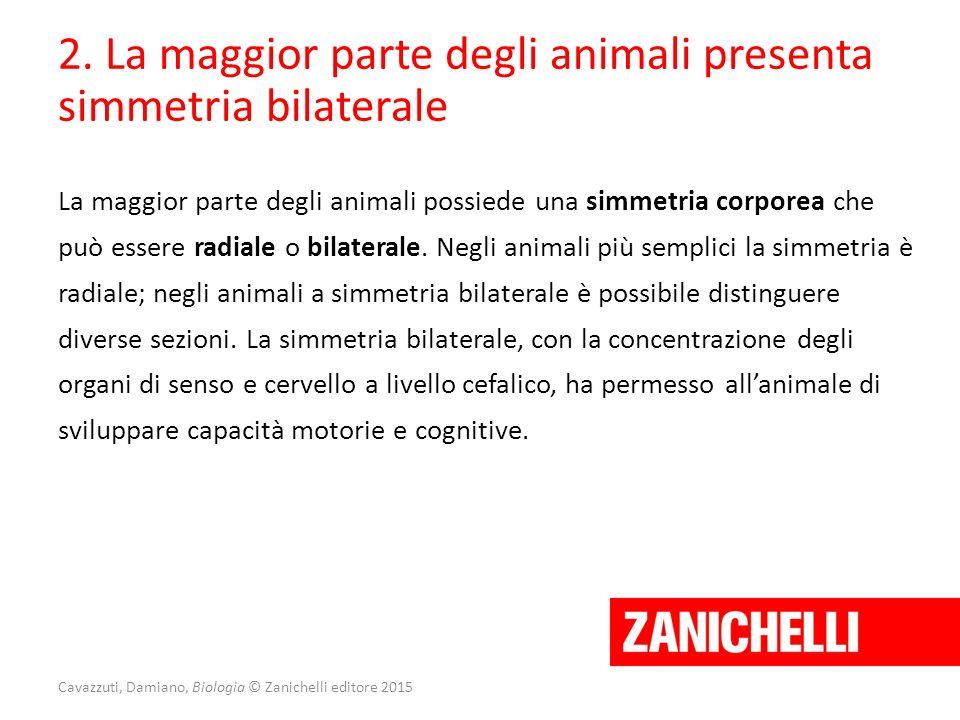 Cavazzuti, Damiano, Biologia © Zanichelli editore 2015 2. La maggior parte degli animali presenta simmetria bilaterale La maggior parte degli animali