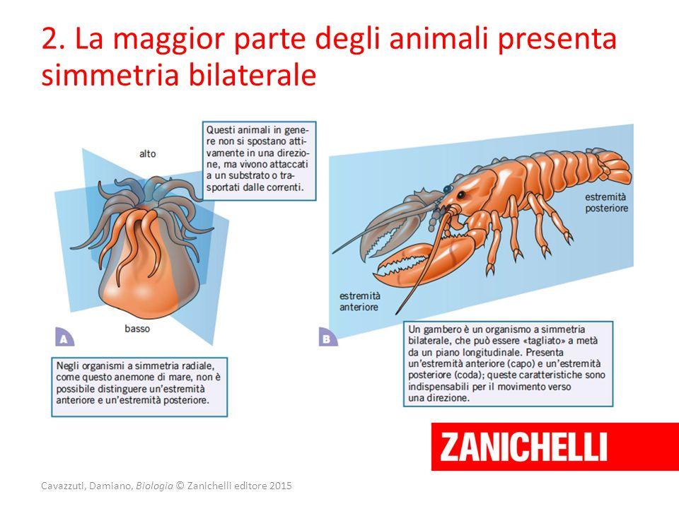 Cavazzuti, Damiano, Biologia © Zanichelli editore 2015 2. La maggior parte degli animali presenta simmetria bilaterale