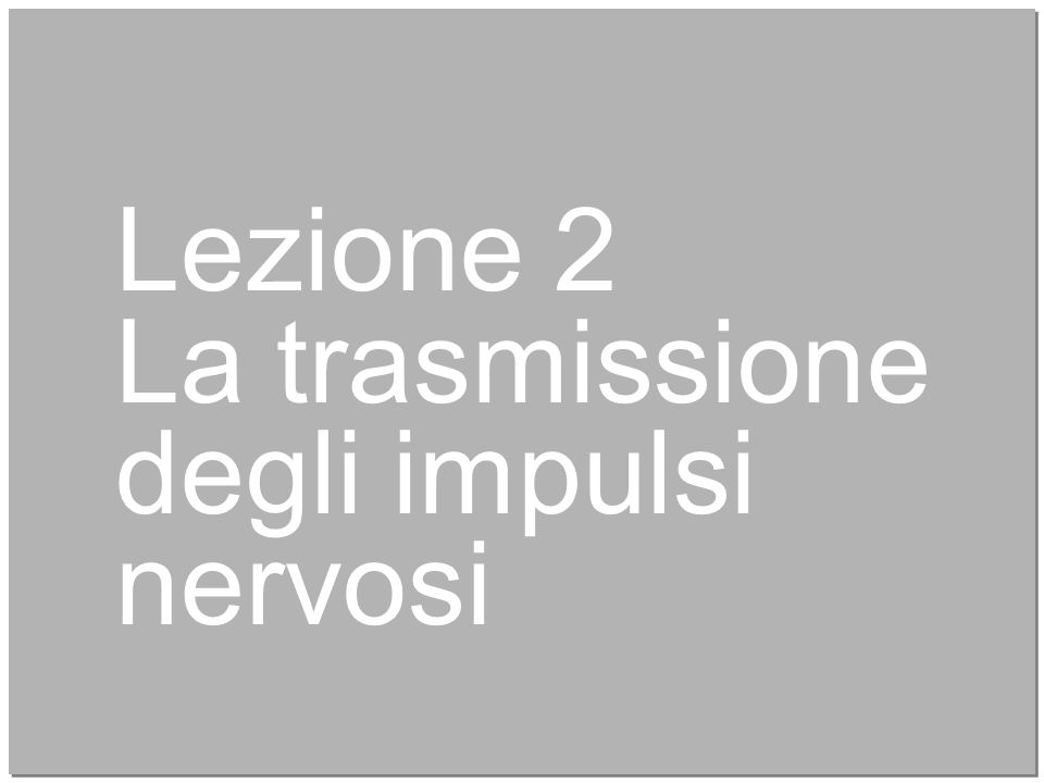 12 Lezione 2 La trasmissione degli impulsi nervosi