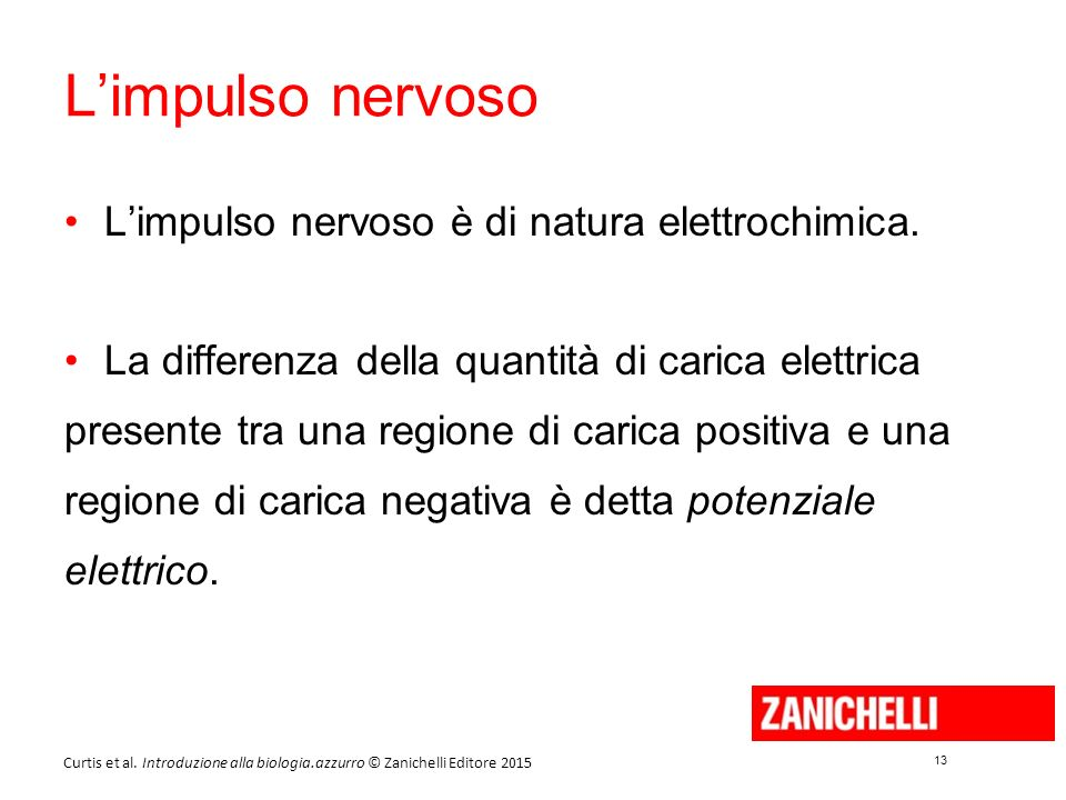 13 Curtis et al. Introduzione alla biologia.azzurro © Zanichelli Editore 2015 L'impulso nervoso L'impulso nervoso è di natura elettrochimica. La diffe