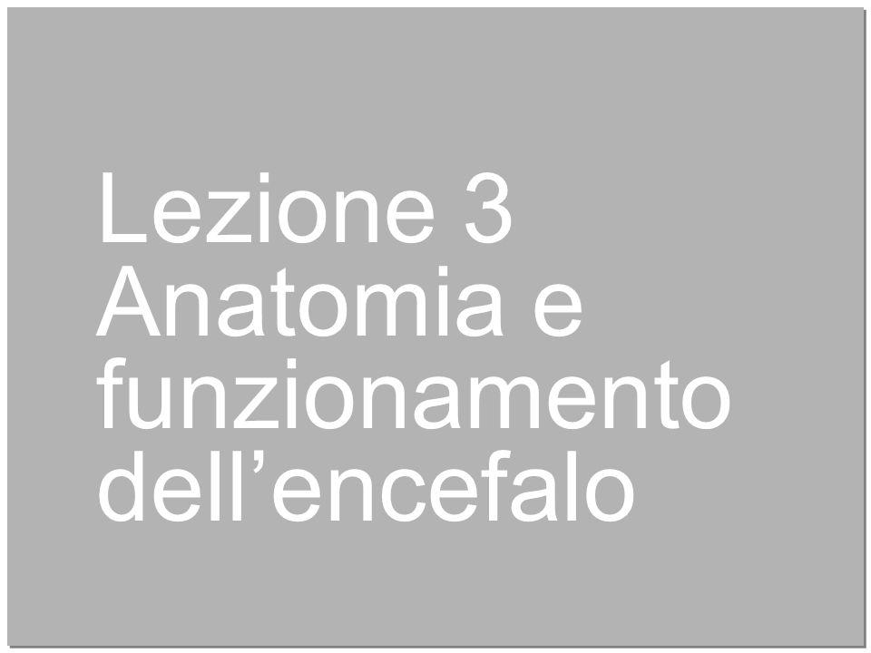 19 Lezione 3 Anatomia e funzionamento dell'encefalo