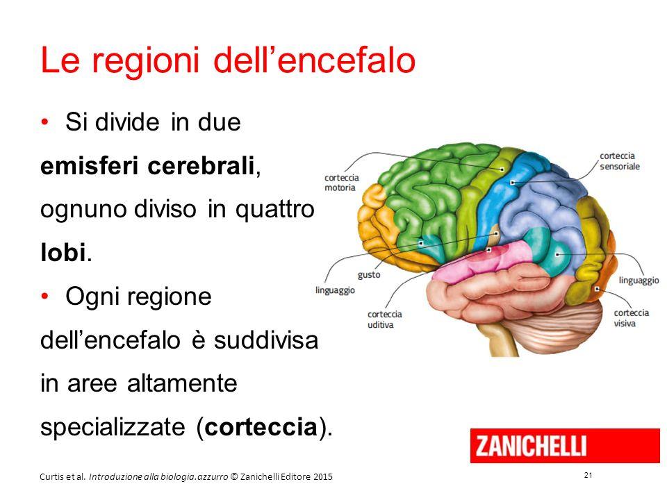 21 Curtis et al. Introduzione alla biologia.azzurro © Zanichelli Editore 2015 Le regioni dell'encefalo Si divide in due emisferi cerebrali, ognuno div