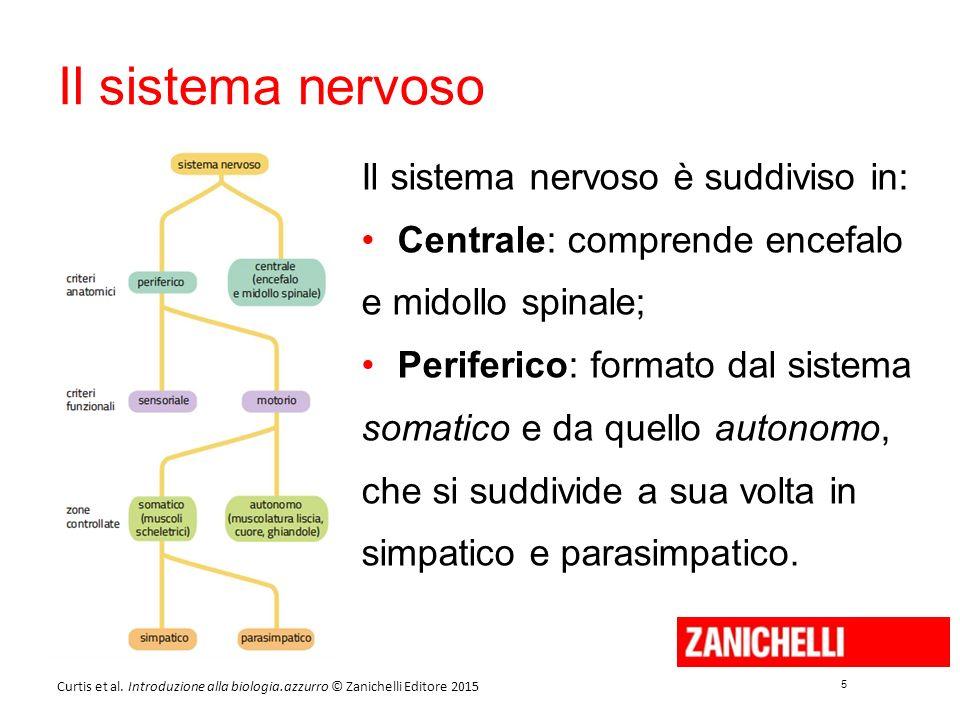 5 5 Curtis et al. Introduzione alla biologia.azzurro © Zanichelli Editore 2015 Il sistema nervoso Il sistema nervoso è suddiviso in: Centrale: compren