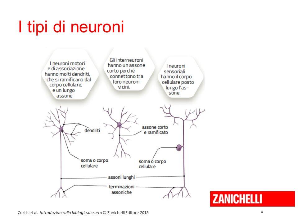 8 8 Curtis et al. Introduzione alla biologia.azzurro © Zanichelli Editore 2015 I tipi di neuroni