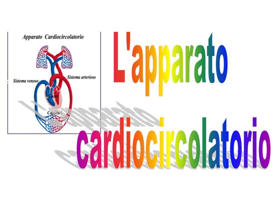 L'attività cardiaca è percepibile attraverso i polsi ovvero i punti in cui le arterie sono superficiali e percepibili al tatto (polso radiale, polso femorale, polso tibiale, polso carotideo, ecc.)