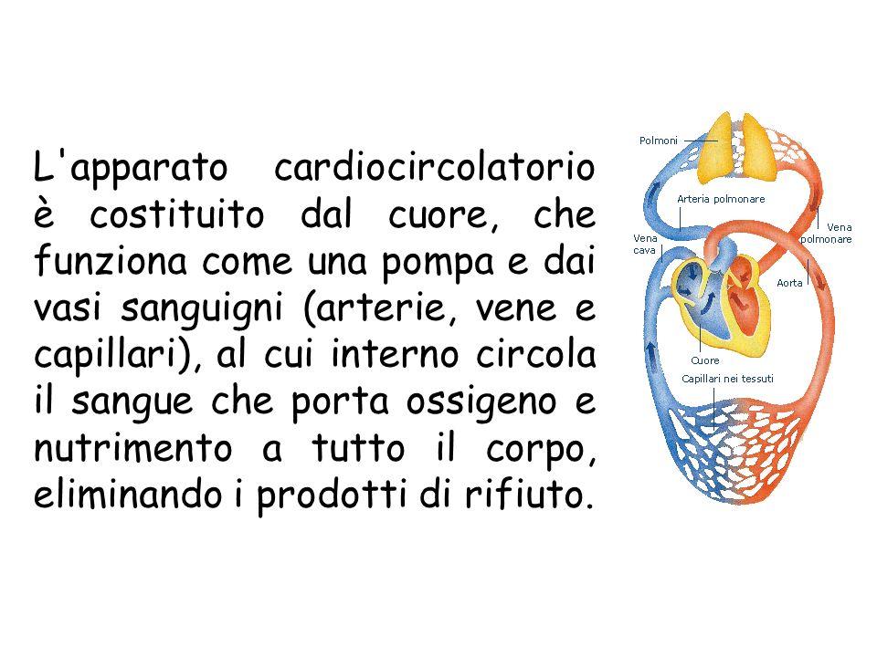 L'apparato cardiocircolatorio è costituito dal cuore, che funziona come una pompa e dai vasi sanguigni (arterie, vene e capillari), al cui interno cir