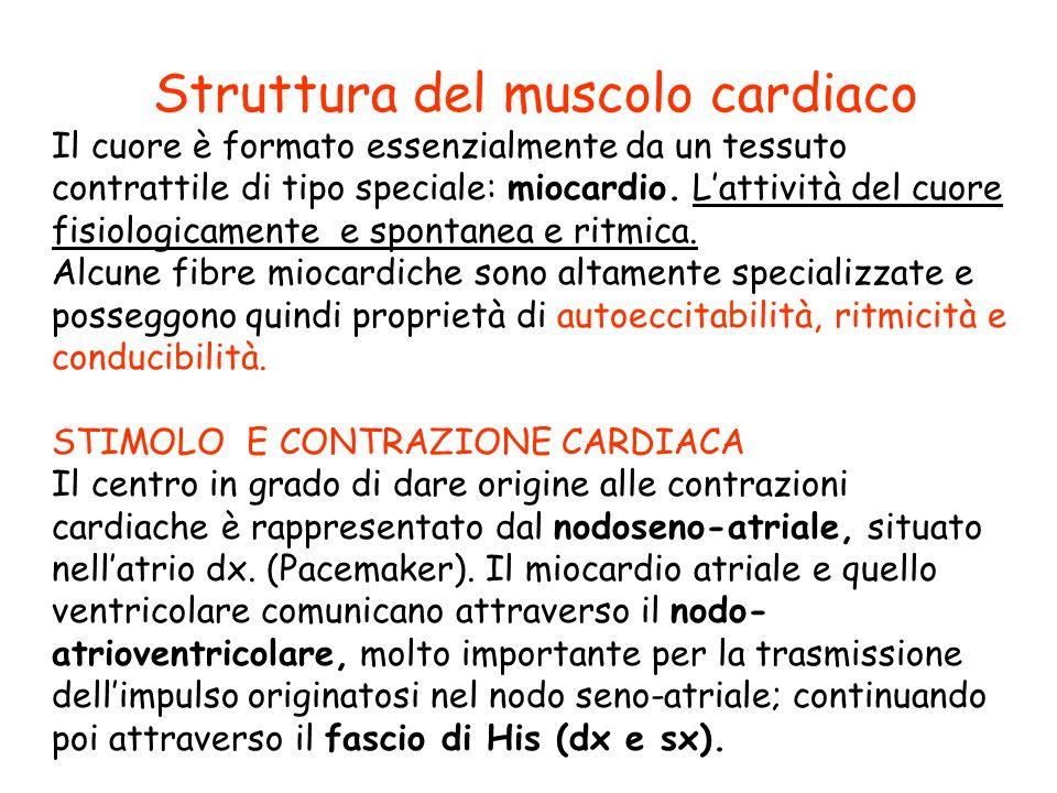 Struttura del muscolo cardiaco Il cuore è formato essenzialmente da un tessuto contrattile di tipo speciale: miocardio. L'attività del cuore fisiologi