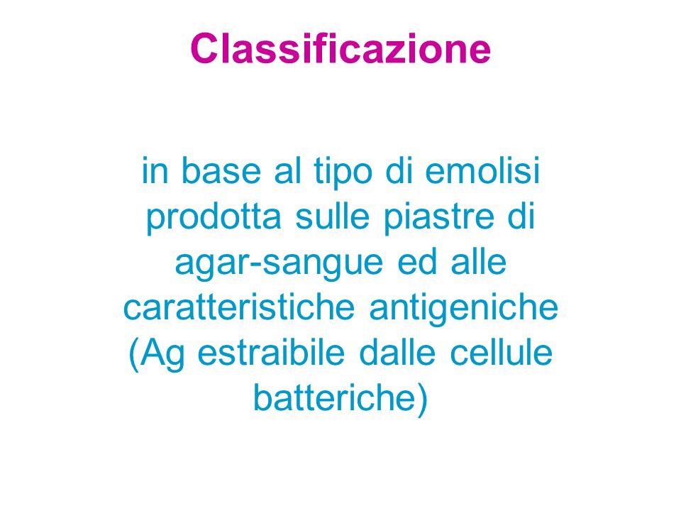 Classificazione in base al tipo di emolisi prodotta sulle piastre di agar-sangue ed alle caratteristiche antigeniche (Ag estraibile dalle cellule batt