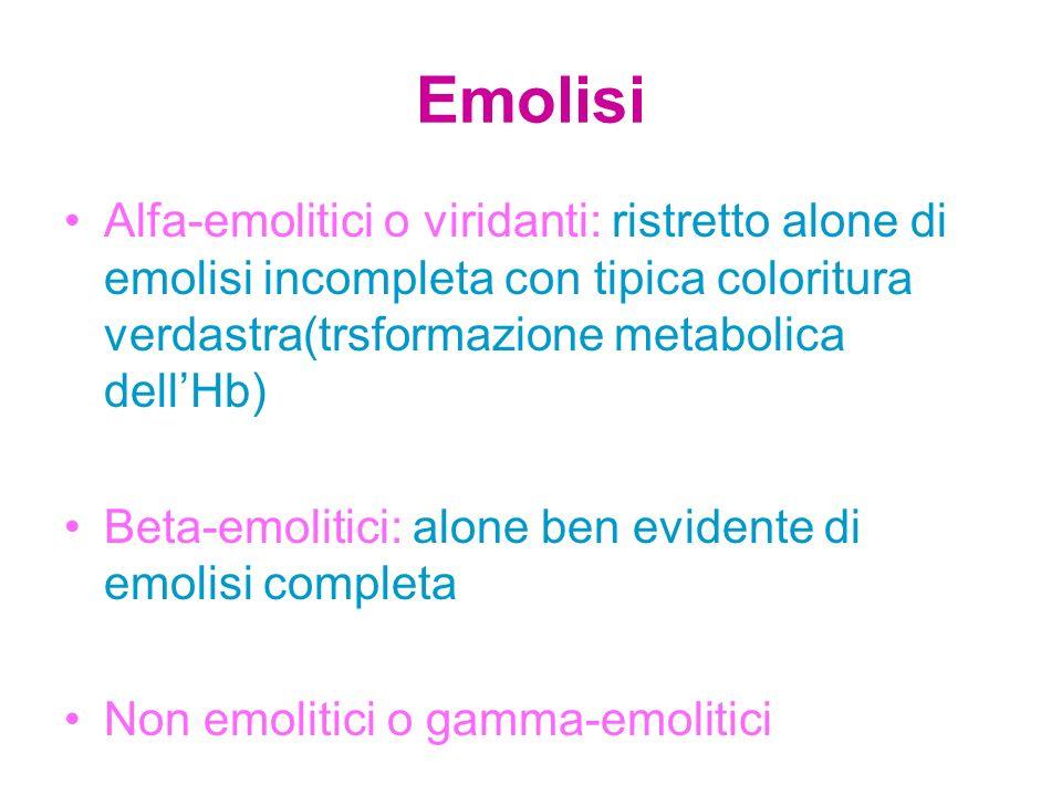 Emolisi Alfa-emolitici o viridanti: ristretto alone di emolisi incompleta con tipica coloritura verdastra(trsformazione metabolica dell'Hb) Beta-emoli