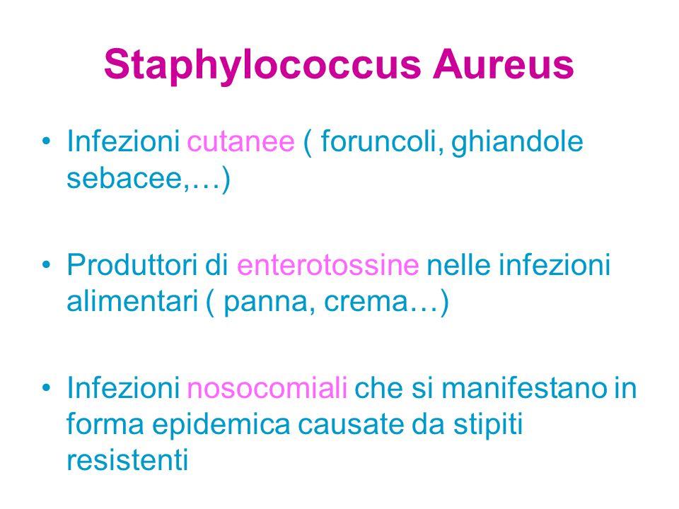 Staphylococcus Aureus Infezioni cutanee ( foruncoli, ghiandole sebacee,…) Produttori di enterotossine nelle infezioni alimentari ( panna, crema…) Infe