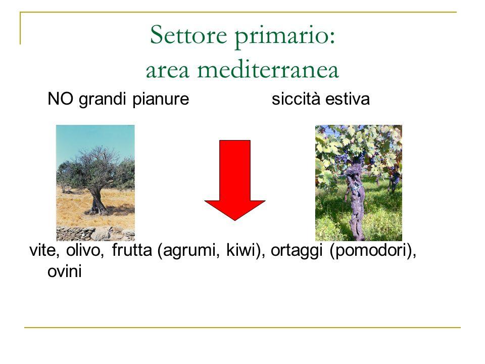 Settore primario: area mediterranea NO grandi pianuresiccità estiva vite, olivo, frutta (agrumi, kiwi), ortaggi (pomodori), ovini
