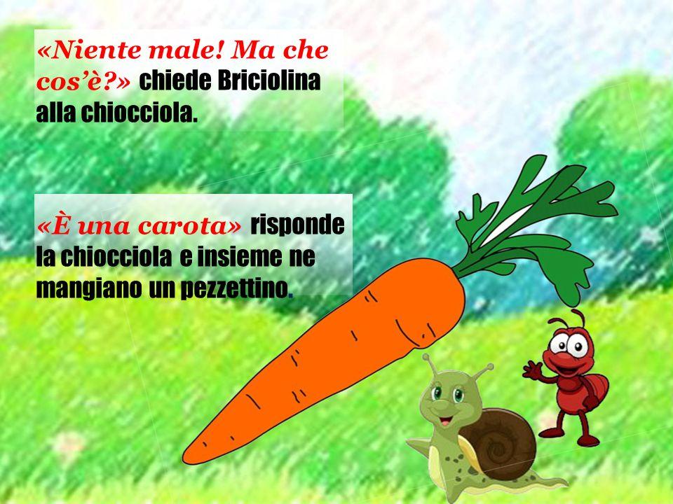 «Niente male! Ma che cos'è?» chiede Briciolina alla chiocciola. «È una carota» risponde la chiocciola e insieme ne mangiano un pezzettino.