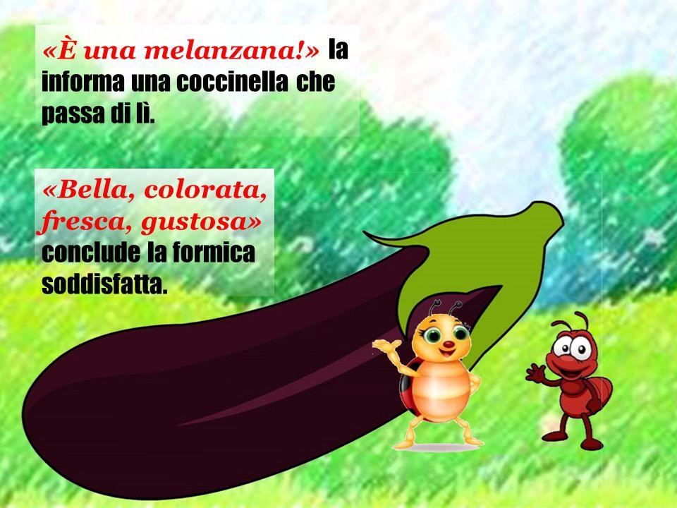 «È una melanzana!» la informa una coccinella che passa di lì. «Bella, colorata, fresca, gustosa» conclude la formica soddisfatta.