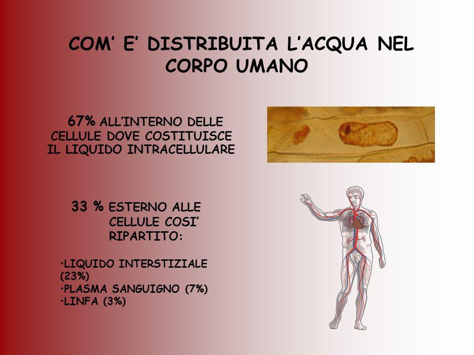 ALTERAZIONE DEL BILANCIO IDRICO IL CORPO UMANO NON SOPPORTA ECCESSIVE VARIAZIONI DEL CONTENUTO DI ACQUA UNA DIMINUZIONE DELLA QUANTITA' DI ACQUA CORPOREA > DEL 7% IN PESO PUO' CAUSARE GRAVI DANNI ALL'ORGANISMO