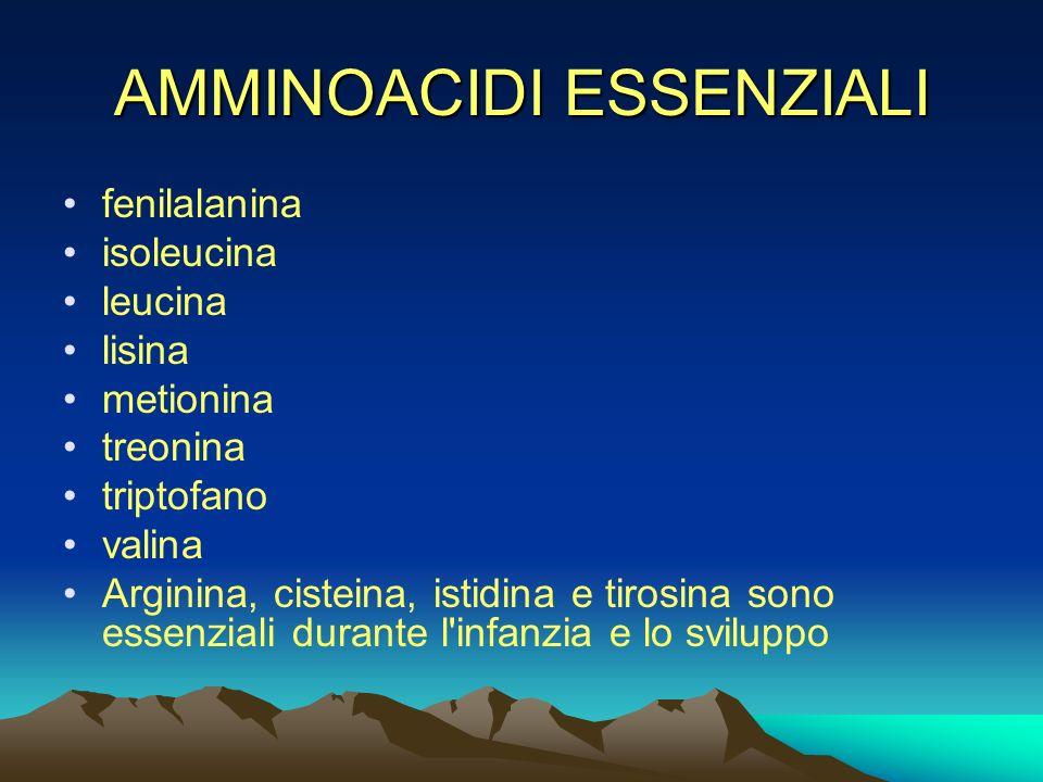 AMMINOACIDI ESSENZIALI fenilalanina isoleucina leucina lisina metionina treonina triptofano valina Arginina, cisteina, istidina e tirosina sono essenz