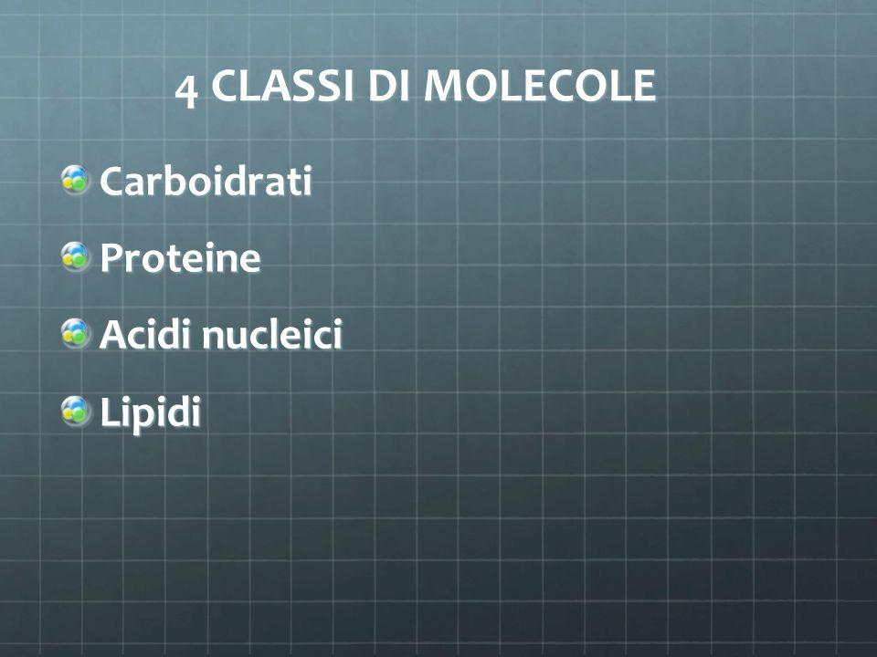 4 CLASSI DI MOLECOLE CarboidratiProteine Acidi nucleici Lipidi