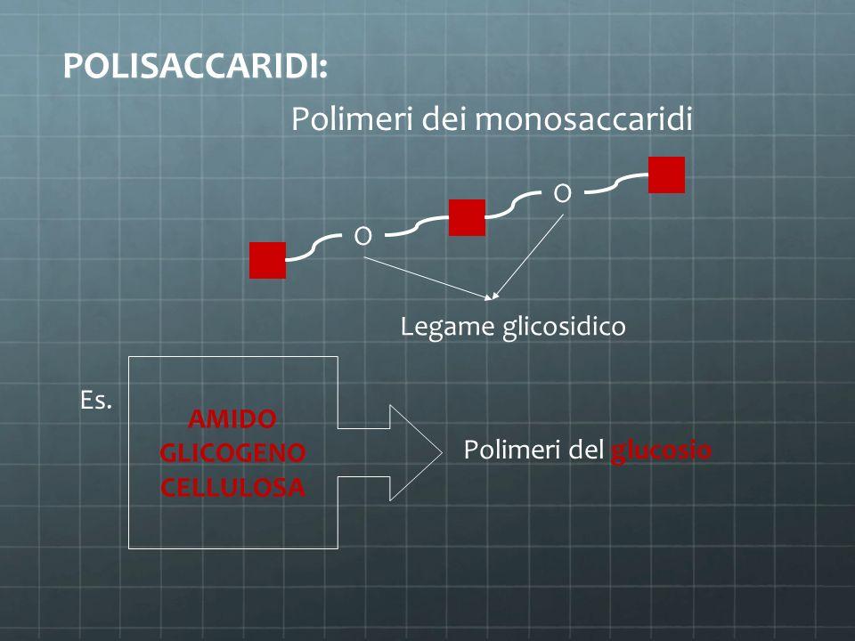 POLISACCARIDI: Polimeri dei monosaccaridi O O AMIDO GLICOGENO CELLULOSA Es. Polimeri del glucosio Legame glicosidico