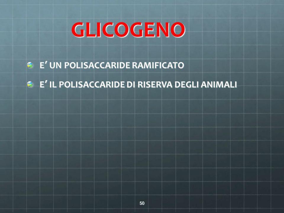 GLICOGENO E' UN POLISACCARIDE RAMIFICATO E' IL POLISACCARIDE DI RISERVA DEGLI ANIMALI 50