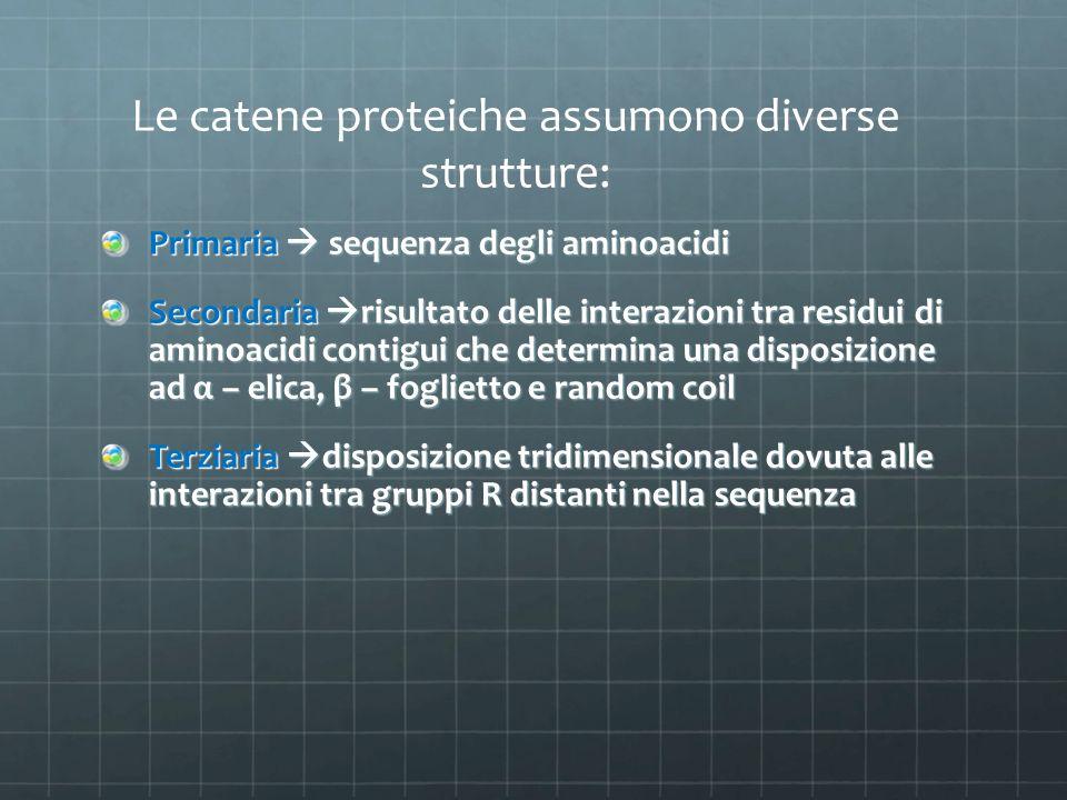 Le catene proteiche assumono diverse strutture: Primaria  sequenza degli aminoacidi Secondaria  risultato delle interazioni tra residui di aminoacid