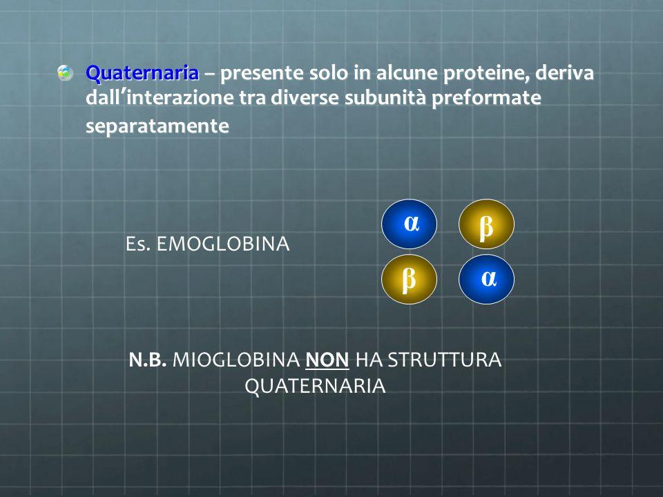 Quaternaria – presente solo in alcune proteine, deriva dall'interazione tra diverse subunità preformate separatamente Es. EMOGLOBINA α α β β N.B. MIOG