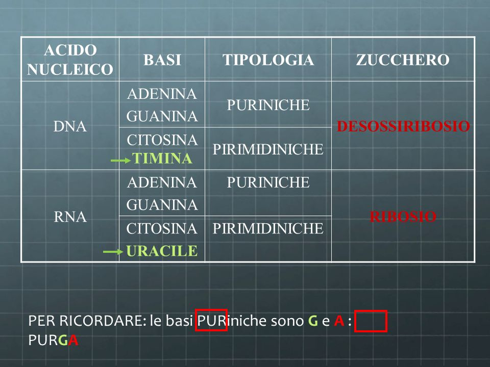 ACIDO NUCLEICO BASITIPOLOGIAZUCCHERO DNA ADENINA GUANINA PURINICHE DESOSSIRIBOSIO CITOSINA TIMINA PIRIMIDINICHE RNA ADENINA GUANINA PURINICHE RIBOSIO