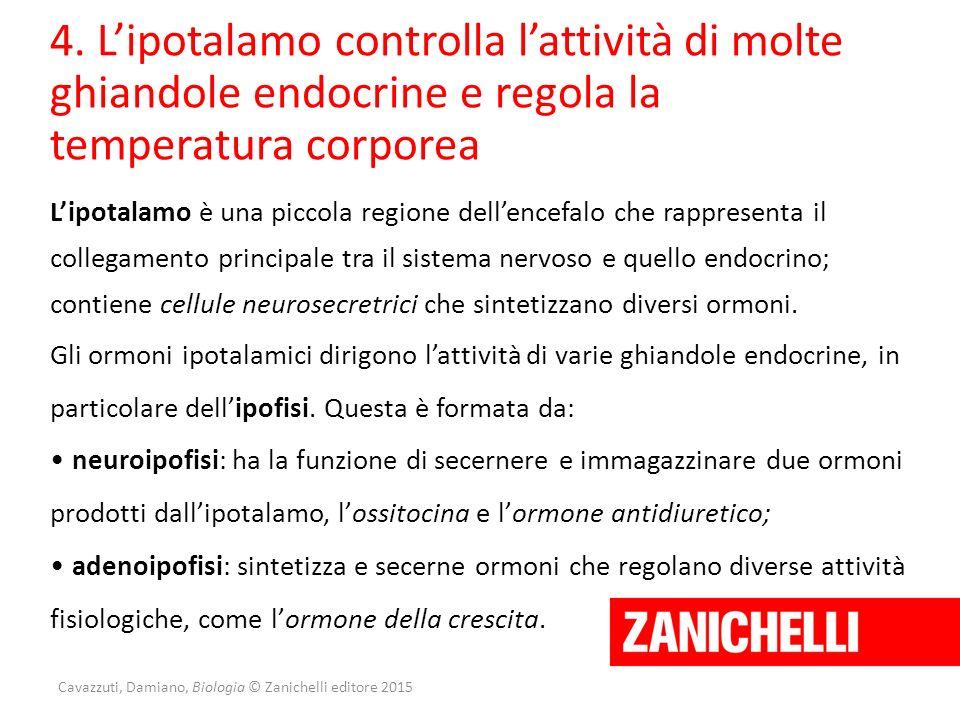Cavazzuti, Damiano, Biologia © Zanichelli editore 2015 4. L'ipotalamo controlla l'attività di molte ghiandole endocrine e regola la temperatura corpor