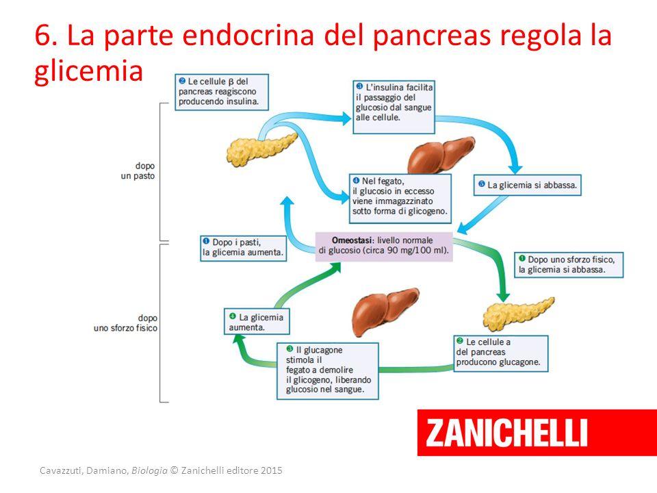 Cavazzuti, Damiano, Biologia © Zanichelli editore 2015 6. La parte endocrina del pancreas regola la glicemia