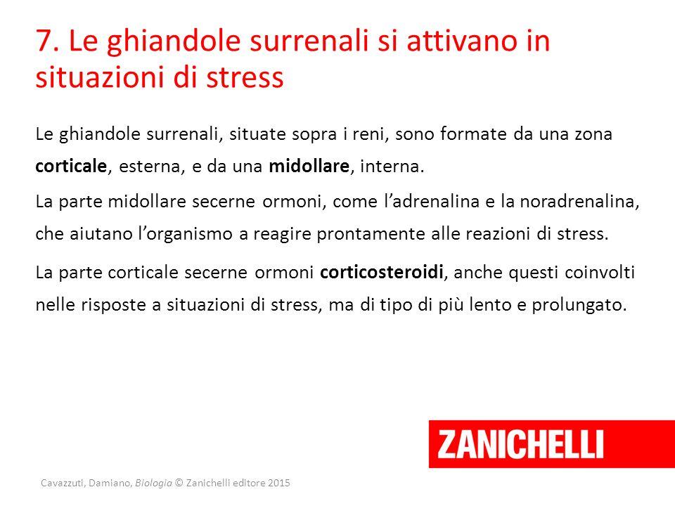 Cavazzuti, Damiano, Biologia © Zanichelli editore 2015 7. Le ghiandole surrenali si attivano in situazioni di stress Le ghiandole surrenali, situate s