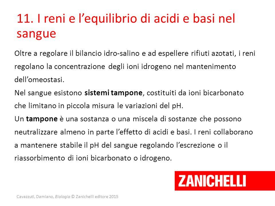 Cavazzuti, Damiano, Biologia © Zanichelli editore 2015 11. I reni e l'equilibrio di acidi e basi nel sangue Oltre a regolare il bilancio idro-salino e