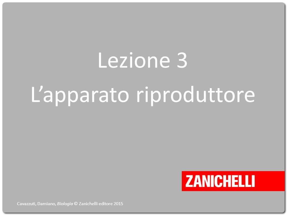 Lezione 3 L'apparato riproduttore Cavazzuti, Damiano, Biologia © Zanichelli editore 2015