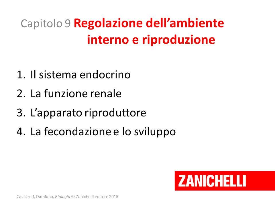 Capitolo 9 Regolazione dell'ambiente interno e riproduzione 1.Il sistema endocrino 2.La funzione renale 3.L'apparato riproduttore 4.La fecondazione e