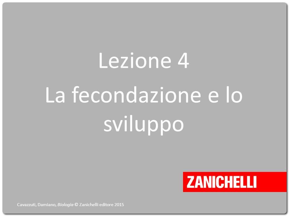 Lezione 4 La fecondazione e lo sviluppo Cavazzuti, Damiano, Biologia © Zanichelli editore 2015