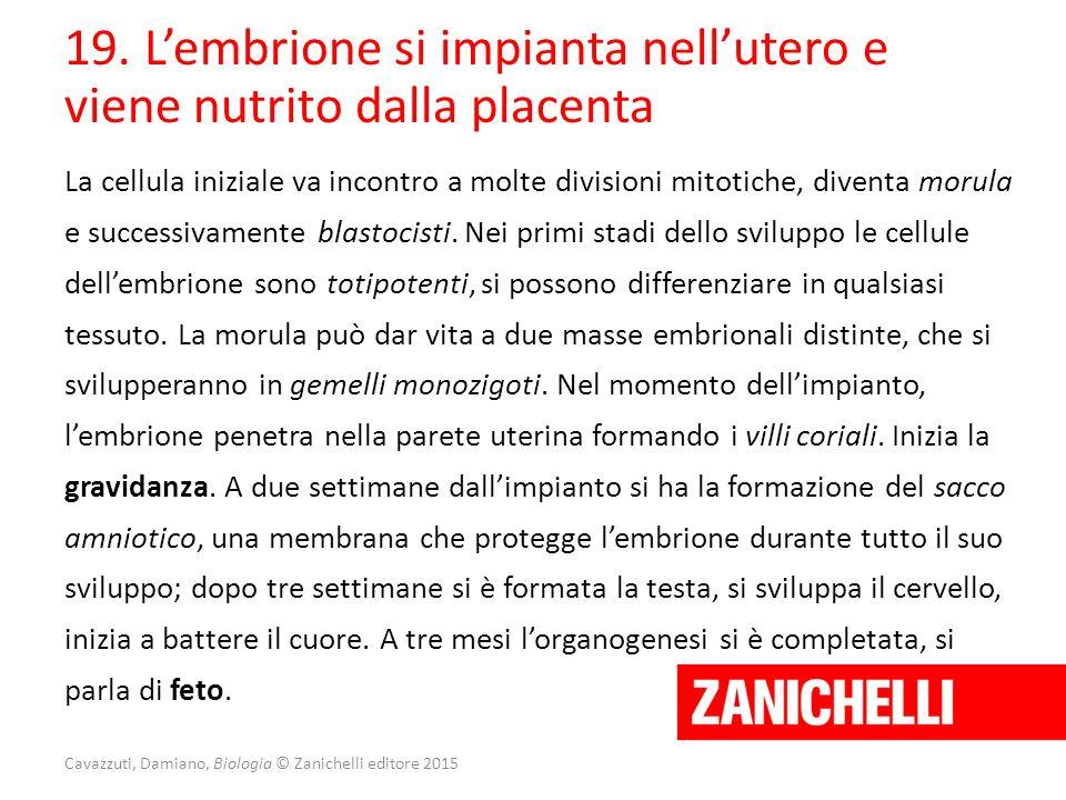 Cavazzuti, Damiano, Biologia © Zanichelli editore 2015 19. L'embrione si impianta nell'utero e viene nutrito dalla placenta La cellula iniziale va inc