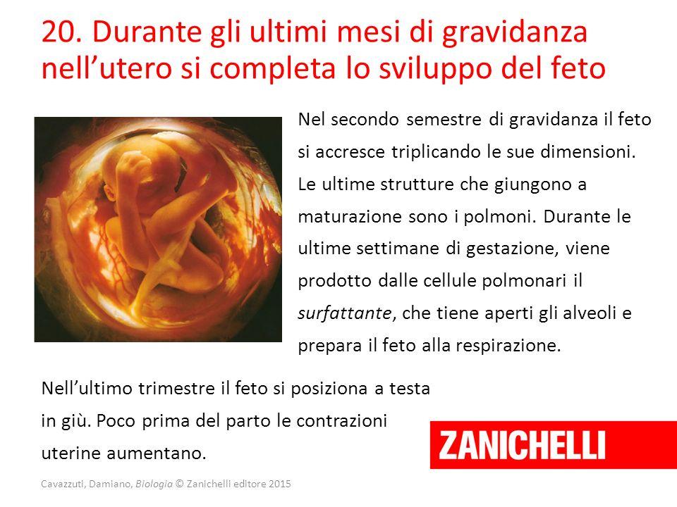 Cavazzuti, Damiano, Biologia © Zanichelli editore 2015 20. Durante gli ultimi mesi di gravidanza nell'utero si completa lo sviluppo del feto Nel secon