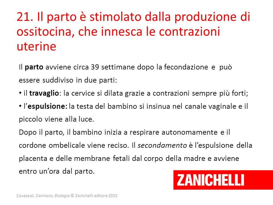Cavazzuti, Damiano, Biologia © Zanichelli editore 2015 21. Il parto è stimolato dalla produzione di ossitocina, che innesca le contrazioni uterine Il