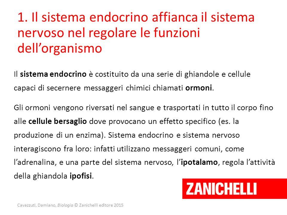 1. Il sistema endocrino affianca il sistema nervoso nel regolare le funzioni dell'organismo Il sistema endocrino è costituito da una serie di ghiandol