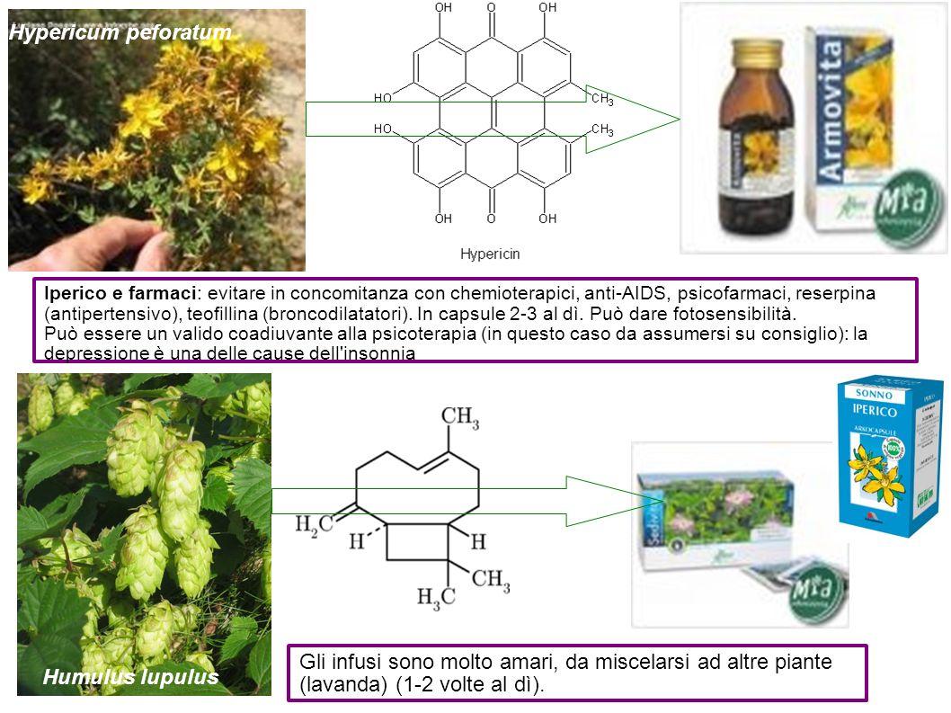 Hypericum peforatum Iperico e farmaci: evitare in concomitanza con chemioterapici, anti-AIDS, psicofarmaci, reserpina (antipertensivo), teofillina (br