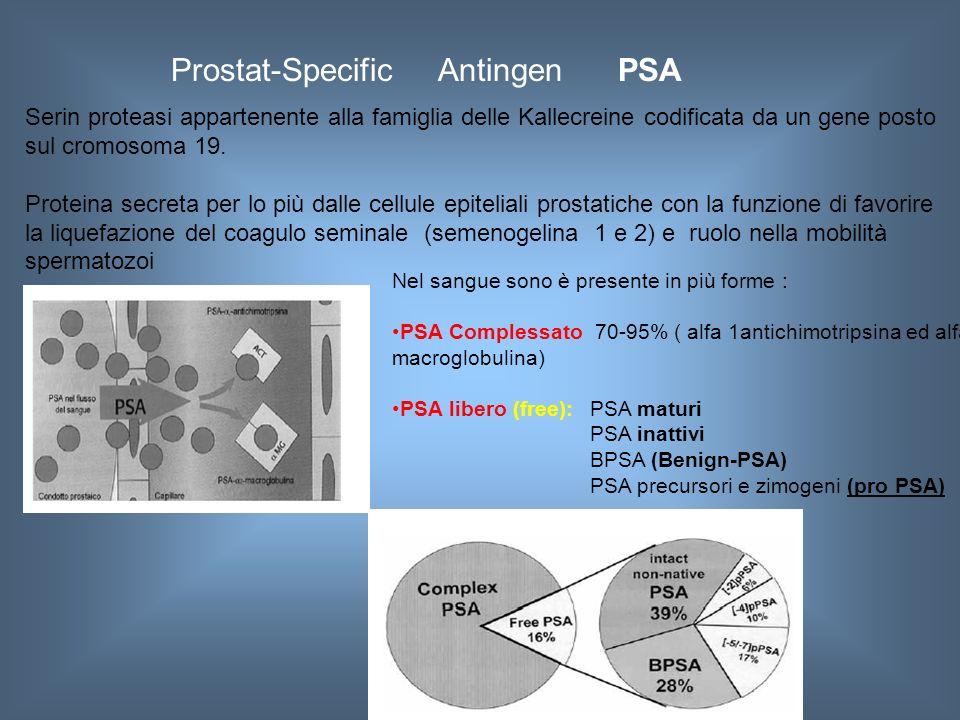 Prostat-Specific Antingen PSA Serin proteasi appartenente alla famiglia delle Kallecreine codificata da un gene posto sul cromosoma 19. Proteina secre