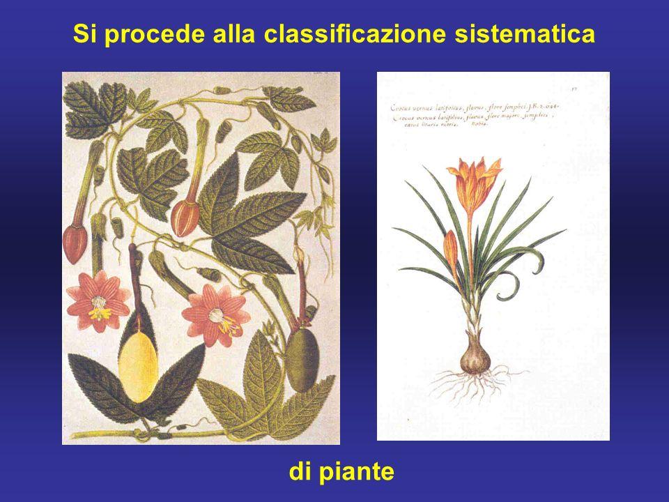 Si procede alla classificazione sistematica di piante